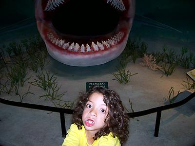 andrew-shark.jpg